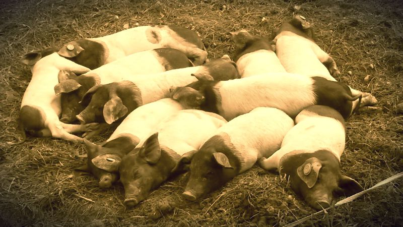 schweinehund überlisten